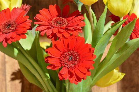 fiori bellissimi da regalare fiori per la laurea ecco i fiori da regalare alla
