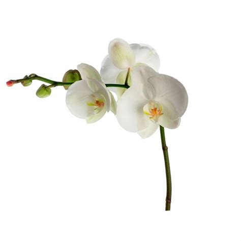 orchid wall stickers orchid wall sticker from b q wall stickers home