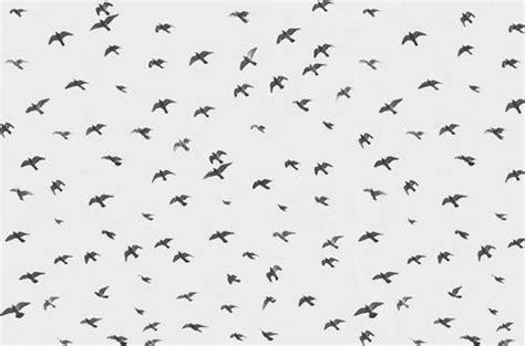 black and white bird pattern awsome backgrounds wallpapers black and white background