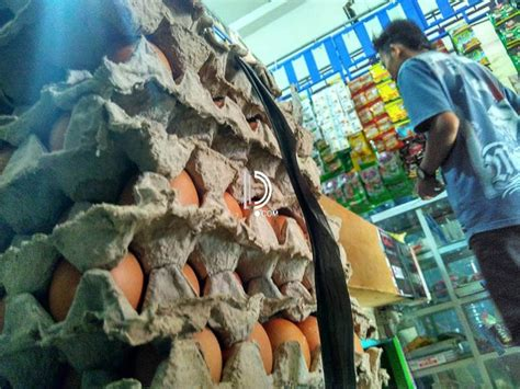 harga telur  bojonegoro cenderung turun detakposcom