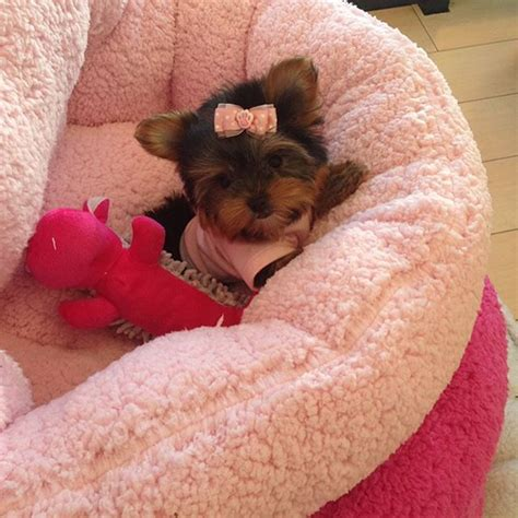 woof woof puppies boutique mua dasena1876 qu instagram photo photos boutiques and puppys
