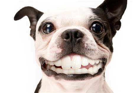 can dogs smile pets n more is this for pets the is revealed