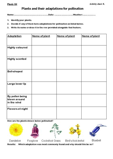 Adaptation Worksheet by Plant Adaptations Worksheet Geersc