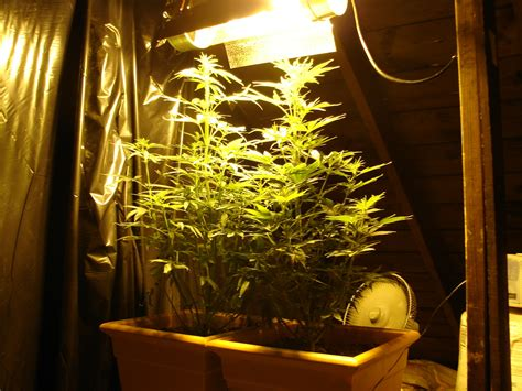 Grow Room by Small Grow Rooms Quotes