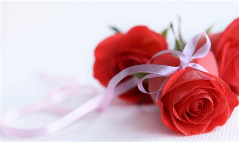 gambar wallpaper bunga mawar  indah banget gambar