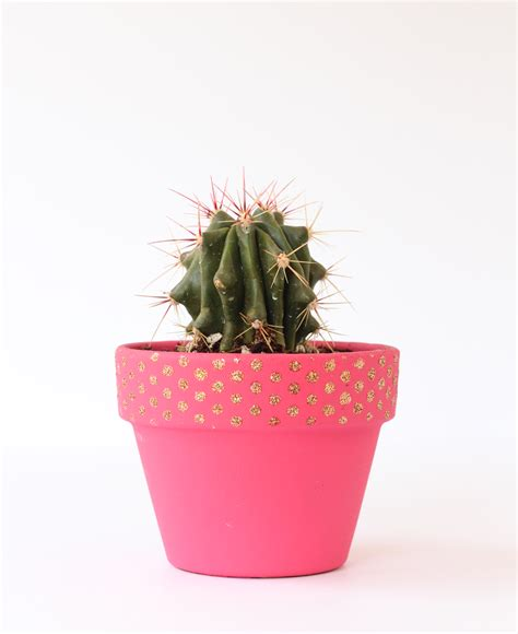 cactus planter stenciled cactus planter the crafted life
