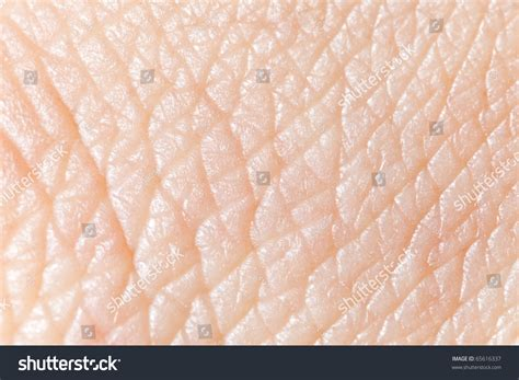 human skin macro picture stock photo 169 jugulator 25119063 human skin macro texture stock photo 65616337