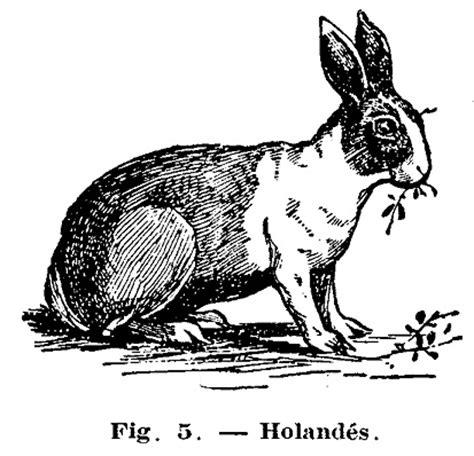 conejera en la piel como hacer conejeras enfermedades de los conejos 2 de 2