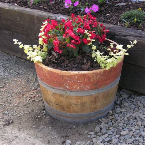 Half Wine Barrel Planters For Sale by Oak Wine Barrel Planters Celtic Timber