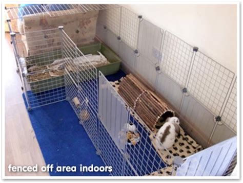 Rabbit Cage Hutch What Size Hutch And Run Should I Get What Do Rabbits