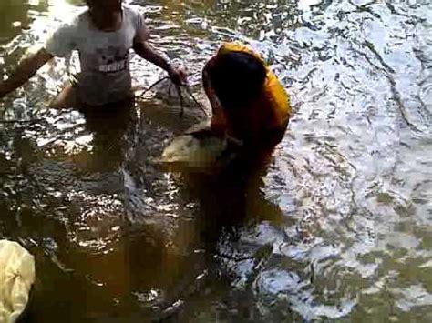 teknik pemijahan ikan bawal doovi