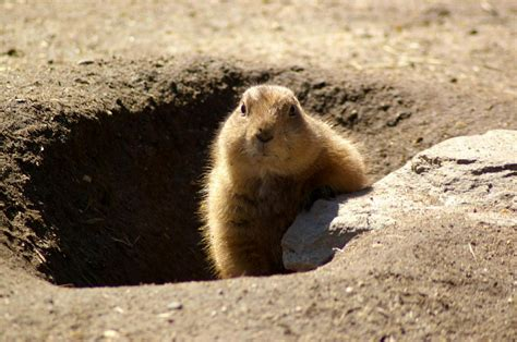 feels like groundhog day meaning 10 ways to out of a rut silverman mcgovern