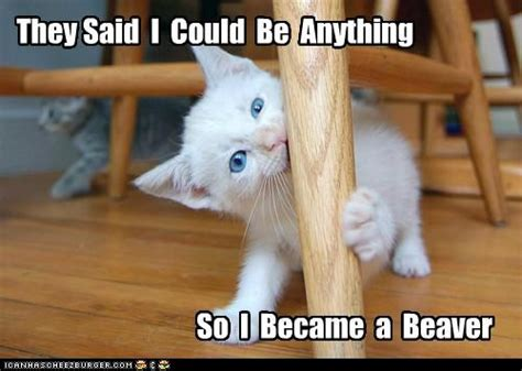 Cute Animals Memes - funny all animals memes photographs funny and cute animals