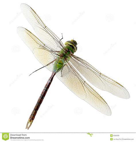 green dragonfly l green dragonfly stock photo image of background wings
