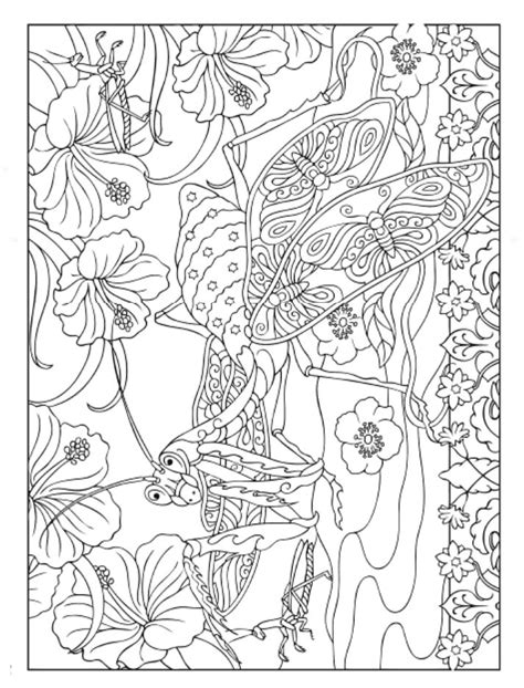 spark bugs coloring book dover coloring books books creative insect designs coloring book
