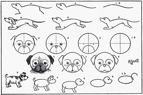 Step By Step Drawing Animals