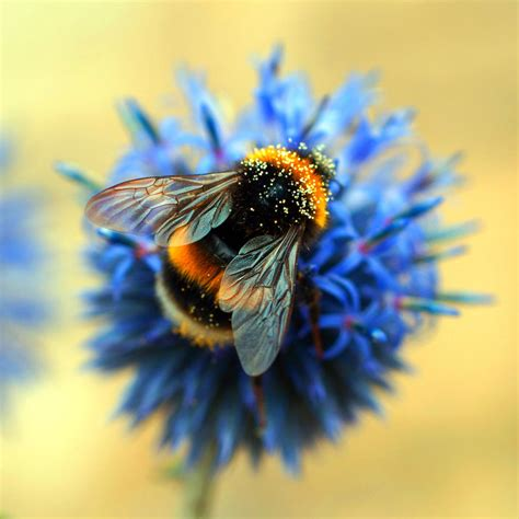 Search For On Bumble Bumble Bee By Adam F On Deviantart