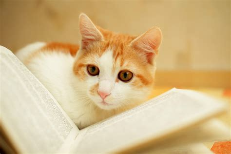Cat Cat cat idioms and expressions oxfordwords