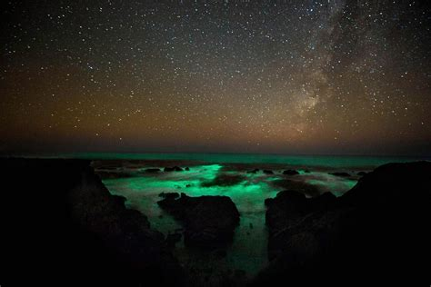 Bioluminescent L by Bioluminescent Phytoplankton Images Folder