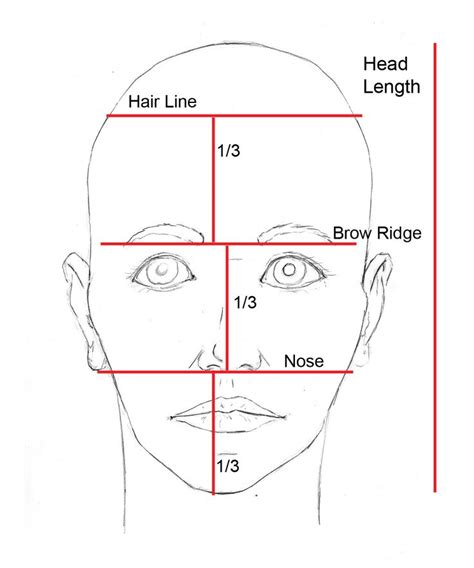 templates for drawing faces 25 best ideas about face proportions on pinterest draw