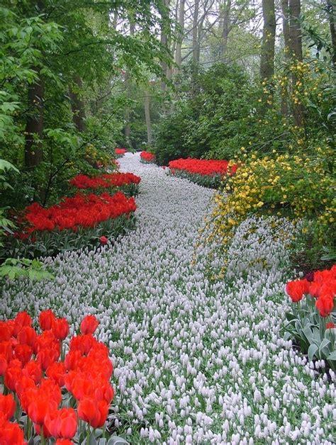 keukenhof flower garden netherlands tulips