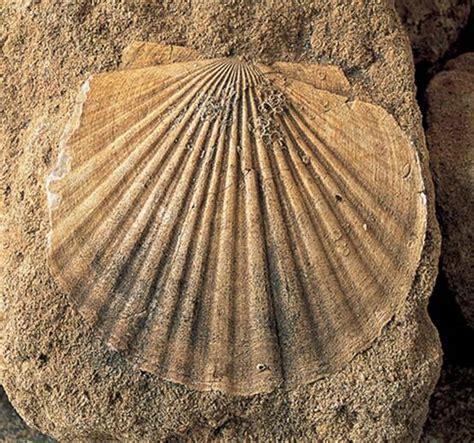 imagenes de fosiles los f 243 siles testigos de otras 233 pocas un planeta con canas
