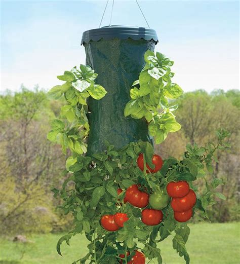 Hanging Vegetable Planters by Tomato Planter 171 Can Be Dun