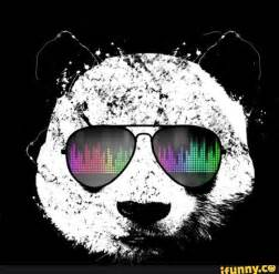 Cool Pictures Of Pandas 58887 DFILES