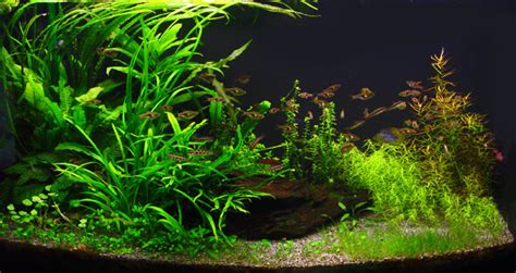 aquaticscape