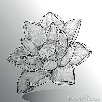 lotus flower sketch stock vector image 59103513
