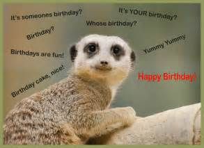 happy birthday cards with animals birthday ideas for