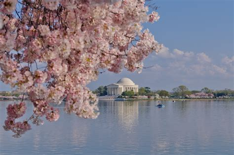 national cherry blossom festival travels with jacki 187 blog archive the national cherry