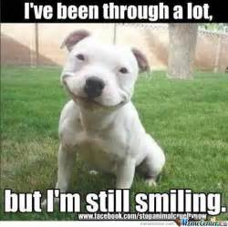 Smile Dog Meme - 75 most funniest smile pictures