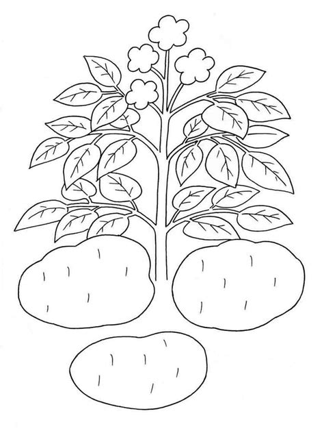 Potato Coloring Pages Download And Print Potato Coloring Potato Coloring Pages
