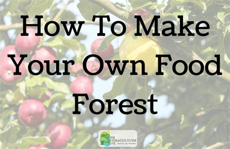 how to make your own food how to make your own food forest the permaculture