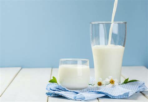 manfaat susu sapi murni  kesehatan khasiatsehatcom