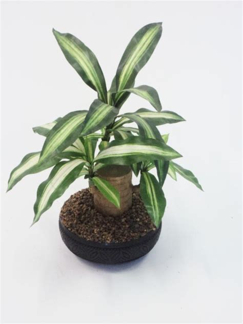 Plants And Planters 40cm happy plant plant only growum fibreglass