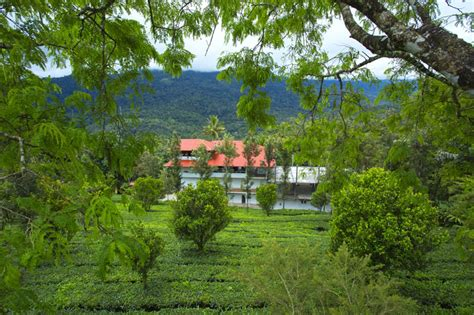 dreamcatcher munnar resort dream catcher plantation resort munnar