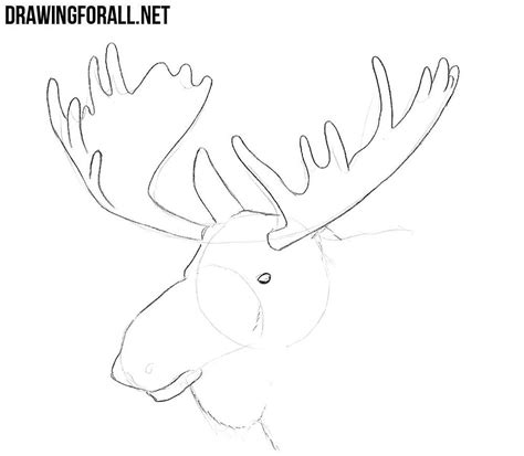 draw  elk head drawingforallnet