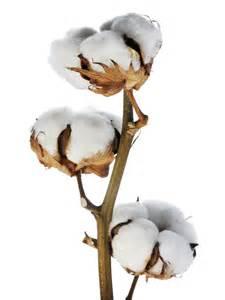 Vanda Vase Cotton Stems Wholesale Metropolitan Wholesale Bulk