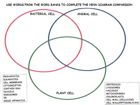 complete the venn diagram cytoplasm between nucleus and cell membrane ppt