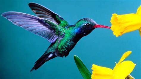 hummingbird wallpaper 1920x1080 74786