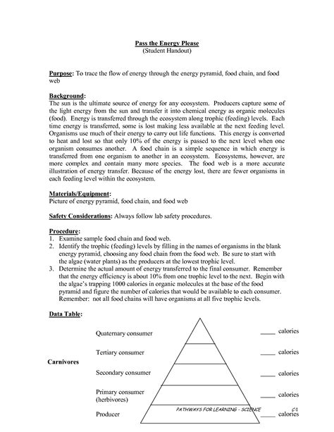 Ecological Pyramids Worksheet Answers by Ecological Pyramid Worksheet Www Imgkid The Image