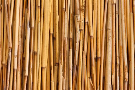 wallpaper abstrak kayu gambar pohon abstrak pagar banyak tekstur lantai