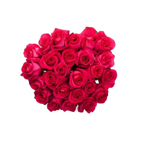 pink roses valentines day valentine s day pink roses s day roses