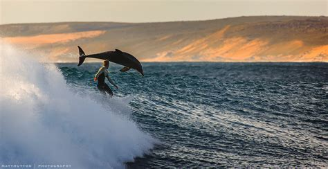 Surfers Australia by Human And Dolphin Surfing Together And Other Beautiful