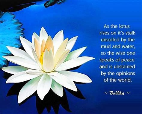 positive buddha quote pictures photos 1000 images about inspiring thoughts on be