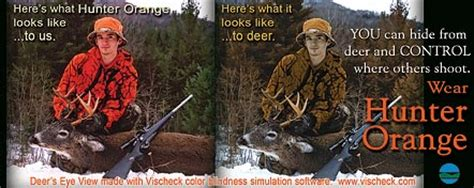what colors can deer see safety basics nys dept of environmental conservation