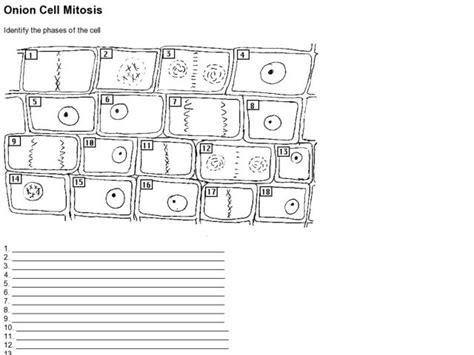 Cell Mitosis Worksheet by Cell Mitosis Worksheet Worksheets Releaseboard