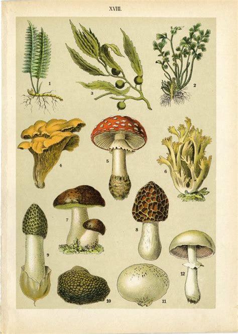 mushroom home decor 25 best ideas about mushroom decor on pinterest